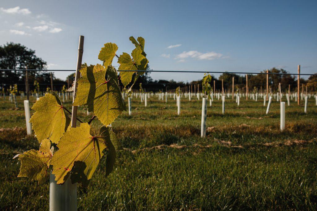 Wolds Wine Estate House Field