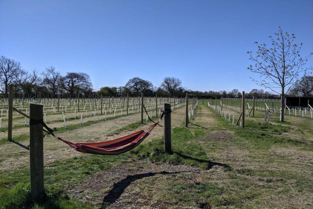 Wolds Wine Estate Hammock Resized